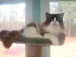 Nube Relaxes Tree Top!