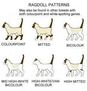 ragdoll-patterns